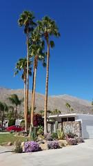 Beautiful, funky Palm Springs