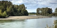 Fishing along the Skagit Riverbanks ( Peterson Photogr@phy) Tags: river washington fishing riverbank washingtonstate mountvernon mtvernon skagitcounty skagitriver stateofwashington nikond5200 nikonafs18140mmf3556edvr