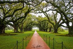 Oak Alley Plantation (Sam2000001) Tags: new nature oak alley orleans louisiana plantation