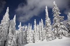Big White Trees (jukerr) Tags: canada britishcolumbia bigwhite