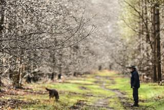 Spring Rain Drops On Trees DOF