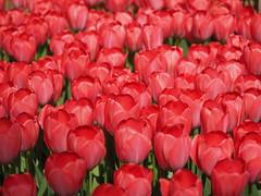mozirski-gaj_10 (carlo) Tags: flowers olympus slovenia slovenija fiore botanicalgarden omd em1 ortobotanico giardinobotanico mozirje mozirskigaj