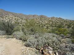 White Tank: Ford Canyon (Roamster Rosalind Gardner) Tags: arizona hiking trail surprise whitetank fordcanyon