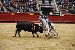 _DSC1035 (Copy) (chris30300) Tags: toros cartagena corrida ventura valence fallas vicens rejon