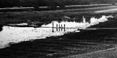 @ Agra, UP (Kals Pics) Tags: life travel people blackandwhite india reflection water monochrome river way blackwhite agra minimalism colorless banks roi cwc uttarpradesh yamuna rootsofindia kalspics chennaiweelendclickers