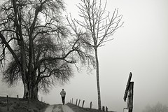 Leichte Aufwrmrunde (Gerd Trynka) Tags: bw tree fog germany nebel path schwarzwald blackforest baum jogger pfad kandern sitzenkirch gerdtrynka xc50230mm ottosohnfoto fujixt10