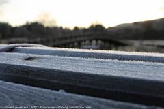 14 (traccediscatti) Tags: brina inverno legno ghiaccio