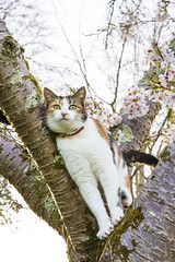 Predator 11/30 (rmrayner) Tags: portrait pet tree cat spring eyes 1130 cherryblossom pussycat ambush gettothechopper april2016amonthin30pictures