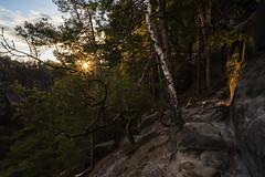Spring sunset (derliebewolf) Tags: sunset sky mountains nature germany de deutschland spring nikon sonnenuntergang natur sachsen flare landschaft wald goldenhour frhling schsischeschweiz rathen d600 saxonswitzerland manuallens 20mmf35ais elbsansteingebirge