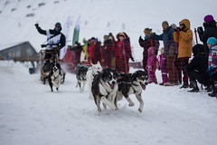 Trappers Trail Spitsbergen (Jake Vince) Tags: dog sport norway race svalbard trail sledding spitsbergen sledge trappers