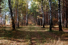 DSC_6004 (Rustam Bikbov) Tags: autumn september 2012    sverdlovskoblast