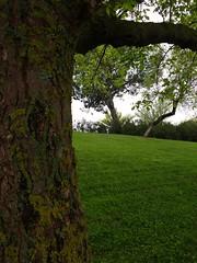 DONDE ESTA ALICIA? .... (aliciap.clausell) Tags: madrid las en tree verde green primavera de arbol alicia lewis el wonderland tronco literatura pais cesped caroll maravillas cuentos