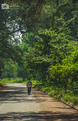 Solitary Walker (Krishanu26) Tags: road plant tree nature outdoor walk lonely solitary