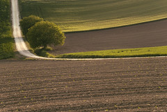 double straight (simoncini.nicola) Tags: sunset panorama colour tree green nature alberi digital relax landscape 50mm golden countryside spring haze nikon outdoor country campagna hour nikkor f18 sole recanati marche d60