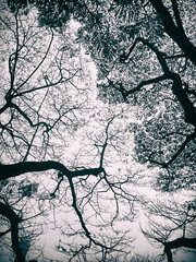 Always Better On The Other Side (ainulislam) Tags: sky tree nature silhouette leaf outdoor branches crack