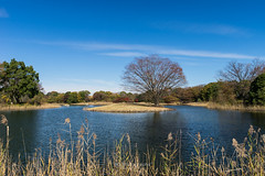 . (bgfotologue) Tags: park autumn japan landscape carpet photography tokyo photo maple image foliage momiji    imaging   gingko   redleaves  showa   2015  bgphoto showamemorialpark   500px  tumblr fbpage bellphoto