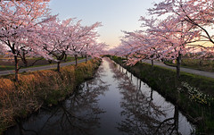 1587 (Keiichi T) Tags: light sunset shadow sky flower reflection tree green water japan canon river eos spring   cherryblossoms      6d