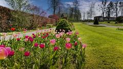 Tulipes (Yasmine Hens) Tags: flowers green nature rose fleurs garden lumix europa flickr belgium ngc vert parc namur hens yasmine wallonie tulipes annevoie jardinsdannevoie world100f iamflickr flickrunitedaward hensyasmine