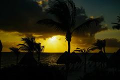 PlayaMujeres_0347 (allen ramlow) Tags: trees cloud sun beach sunrise sony playa palm mujeres a6000