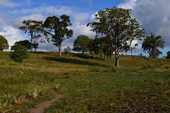 005-003 rvores em primeiro plano p de jenipapo (agnaldo.severo) Tags: verde azul paisagem cu nuvem rvores
