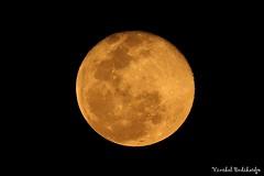 Moon (Vinchel) Tags: park moon nature cat canon is outdoor vietnam national ii l usm f28 ef tien 400mm 1dx