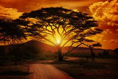 Africa Sunset (T2Edge) Tags: africa italy tanzania tramonto safari cielo serengeti sole albero turismo viaggi vacanza giraffa foresta africano sudafrica savana viaggiare tempolibero raggiodisole giungla paesaggioafricano selvagio