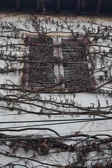 shutters (Mr. Clive) Tags: window vines shutters fentre volets entangled d3300