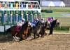 "2015-12-19 (5) r4 and they're off (JLeeFleenor) Tags: photos photography md marylandracing laurelpark marylandhorseracing jockey جُوكِي ""赛马骑师"" jinete ""競馬騎手"" dżokej jocheu คนขี่ม้าแข่ง jóquei žokej kilparatsastaja rennreiter fantino ""경마 기수"" жокей jokey người horses thoroughbreds equine equestrian cheval cavalo cavallo cavall caballo pferd paard perd hevonen hest hestur cal kon konj beygir capall ceffyl cuddy yarraman faras alogo soos kuda uma pfeerd koin حصان кон 马 häst άλογο סוס घोड़ा 馬 koń лошадь gate maryland"
