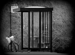 Night rider (Renee Rendler-Kaplan) Tags: winter light snow glass bike bicycle sign night canon bench outside outdoors evening cta darkness post busstop transportation transit signage suburb lit february shelter left deserted brambles plasticbags wbez chicagoist 2016 nightrider chicagoreader garbagebins skokieillinois villageofskokie reneerendlerkaplan canonpowershotsx530hs