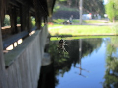 Spinne an der Enz bei Neuenbrg (thobern1) Tags: river germany spider spinne fluss schwarzwald blackforest badenwrttemberg enz neuenbrg enzkreis