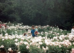 Peonies at the Arb, Gary, Ian, Janelle 1993 (Tatiana12) Tags: family classic ian gary fathersday janelle arb peonies nystrom tather