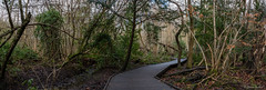 Moseley Bog (Jemma Graham) Tags: uk trees england panorama woodland landscape birmingham woods britain path walk paths bog moseley moseleybog 100216 moselybog