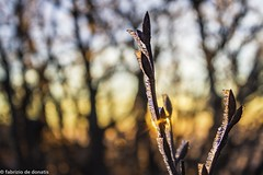20022016-_MG_6686 (fabriziodedonatis) Tags: sunset italy panorama snow ice canon de landscape frost tramonto fabrizio 7d neve urbino 1855 pesaro ghiaccio nerone montaga donatis