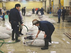 Watering the frozen tuna (minimi007) Tags: fish japan canon tokyo market auction tsukiji tuna fishmarket tsukijifishmarket canonpowershotg11