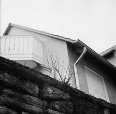 Just another plant in the wall (knochenjunge) Tags: street urban white black 6x6 film analog 400 medium format pushed kiev 2500 fomapan analoge