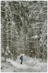 Sentirsi piccoli... (marypink) Tags: trees winter snow forest germany bavaria germania foresta baviera bayerischerwaldnationalpark nikkor80400mmf4556 nikond7200