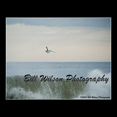 gull over stormy ocean (wildlifephotonj) Tags: seagulls bird nature birds wildlife seagull gull gulls beachbirds naturephotography shorebirds wadingbirds naturephotos wildlifephotography wildlifephotos gullsflight natureprints wildlifephotographynj naturephotographynj