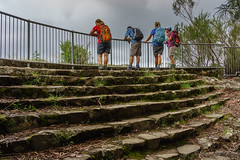 Lookout on the Warrie Circuit (NettyA) Tags: stairs rainforest steps australia lookout bushwalking qld queensland hikers bushwalk springbrook goldcoasthinterland 2016 springbrooknationalpark scenicrim bushwalkers seqld warriecircuit scbwc sonya7r
