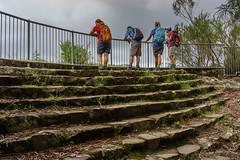 Lookout on the Warrie Circuit (NettyA) Tags: stairs rainforest steps australia lookout bushwalking qld queensland hikers bushwalk springbrook goldcoasthinterland 2016 springbrooknationalpark scenicrim bushwalkers seqld warriecircuit scbwc sonya7r