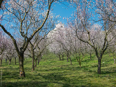avenue of blossom (D-j-L) Tags: trees sky grass canon prague blossom flag sunny czechrepublic gloriette s100 usembassy