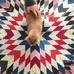 Picked up this 1920s quilt from A String or Two on Etsy. A+++ would buy again (seanflannagan) Tags: 1920s cat vintage quilt etsy buckybronner