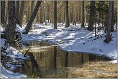 BUSCANDO HIELO (Juan J. Marqués) Tags: arboles nieve hielo reflejos albarracín