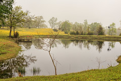 Morning in Centerville (Scosanf) Tags: trip morning travel flowers vacation reflection water yellow fog canon eos rebel spring pond texas roadtrip springbreak wildflowers topaz 6d ef50mmf14usm