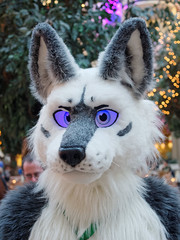 Eurofurence 2015 (Deeragon Entertainment) Tags: furry wolf tommy fursuit 2015 eurofurence fursuiter fursuiting ef21