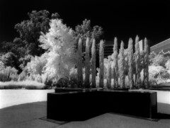 Botanic Gardens (polyglot) Tags: 120 adelaide botanicgardens filmscan rz67 xtol r72 jobo ir820 12073205jpg