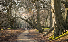 Just outside (NED_KELLY_GUY) Tags: morning trees tree nature forest woodland landscape spring arch path tunnel berkhamsted biking trunk nationaltrust leafy atmospheric pathway ashridge berko rut ashridgeestate diamondclassphotographer flickrdiamond ashrideestate