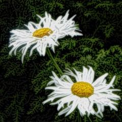 Painted Daisies. (sallyNZ) Tags: daisies garden likeapainting scavenger16