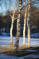 //Primavera//Spring/Frhling/Printemps 2016 Moscow 04 (Taema) Tags: primavera spring moscow printemps frhling