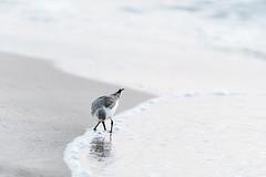 Reflecting (aliffc3) Tags: bird art artistic reflexions minimalist nikkor300mmf4ed nikond750