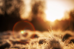 bokeh flare (Rainer Schund) Tags: nature nikon nebel bokeh natur lensflare flare gras ok makro morgen raureif morgens reif absicht nikond700 naturemasterclass natureexploring